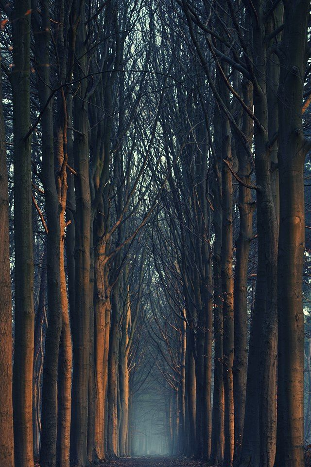 Trees in Bruges, Belgium..this looks like the forest in Snow White