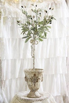 olive topiary