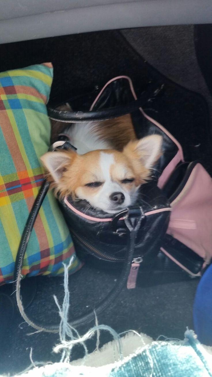 Trop mignonne  dans son  sac