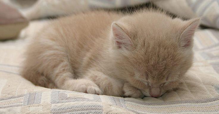 Cómo salvar la vida de un gatito recién nacido y huérfano. Si una madre da a luz a sus gatitos antes del período normal de gestación de nueve semanas, se consideran prematuros igual que aquellos, cuyo peso sea inferior al normal. De la misma manera que un bebé humano, los cachorros requieren de muchos cuidados para asegurar su supervivencia, por lo que salvar a los gatitos prematuros puede ser difícil, ...