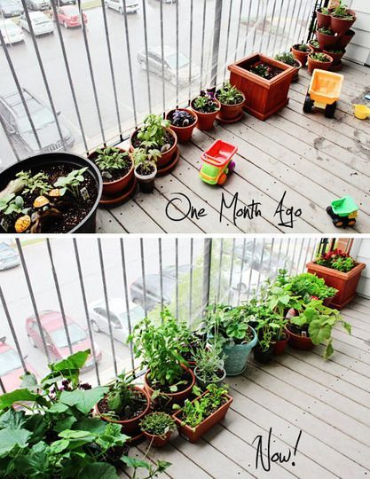 Balcony Garden For a Toddler–apartment therapy.com-Wonderful teaching exercise for a 2-year old, bottom pic is one month after the garden was planted…Nice job!