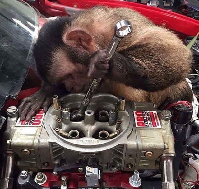 Картинки по запросу monkey wrench joke