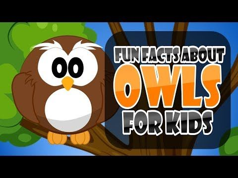 Today Jeremiah talks about one of his favorite birds, the owl. Check out his top 5 fun facts about owls for kids.