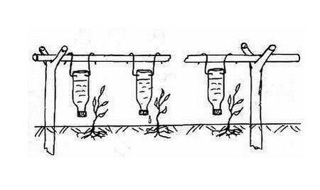 Система капельного полива из подвесных бутылок