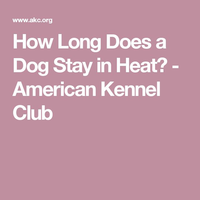 How long is a dog in heat?