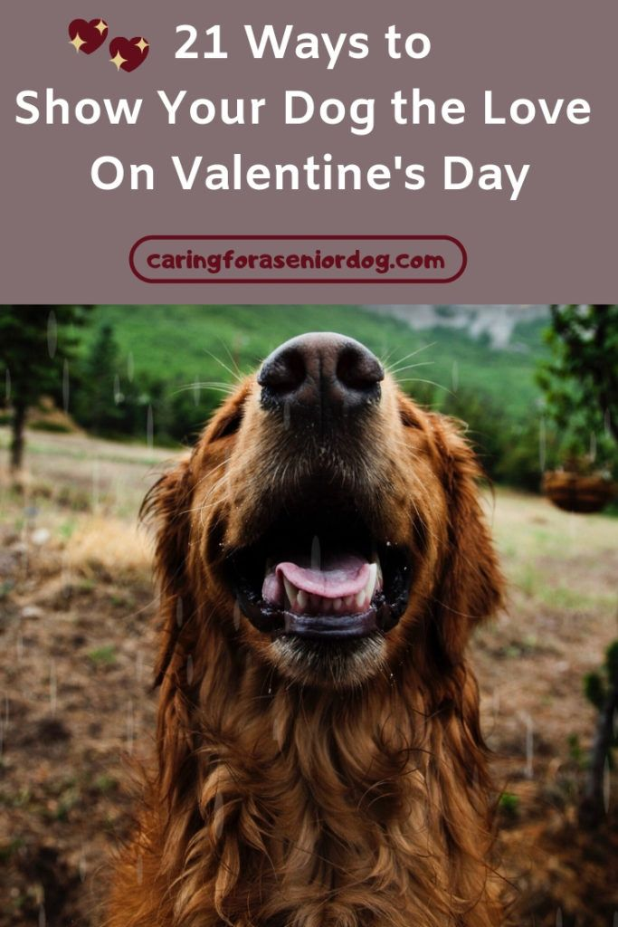 21 Ways To Show Your Dog The Love On Valentine S Day Dogs Pet