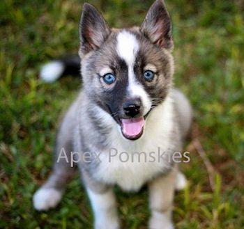 Awh I want, those eyes are soo cute