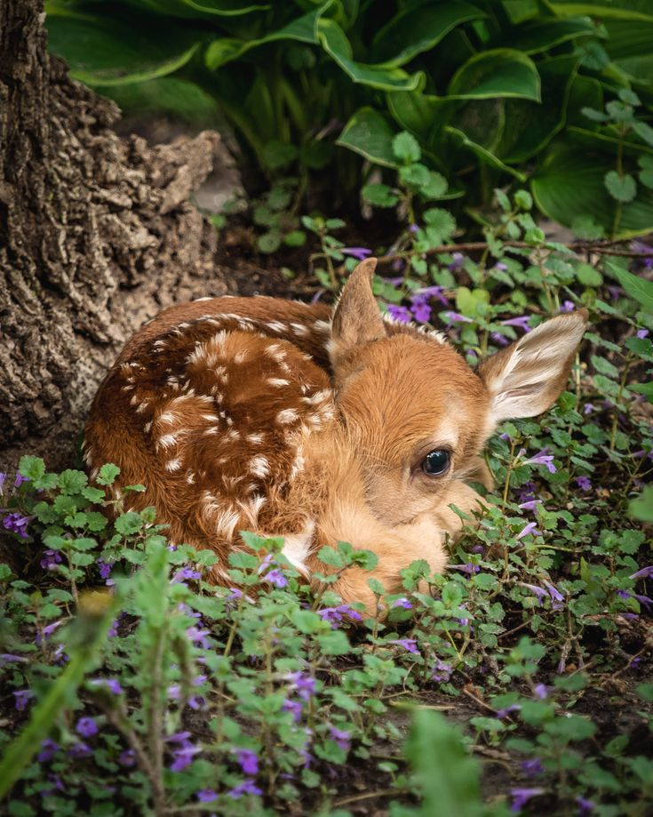 Cute Baby Deer Photograph Spotted Fawn Photo Baby Animals Etsy In 2021 Baby Wild Animals Cute Wild Animals Animals Wild