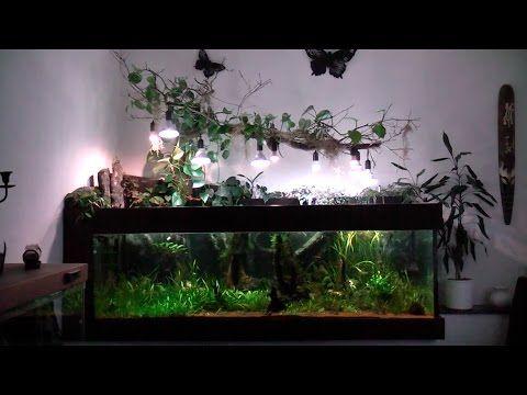 1200l Aquarium, Südamerika Becken mit LED-Beleuchtung. Mit Peru Altum, Sammler und L-Welsen - YouTube