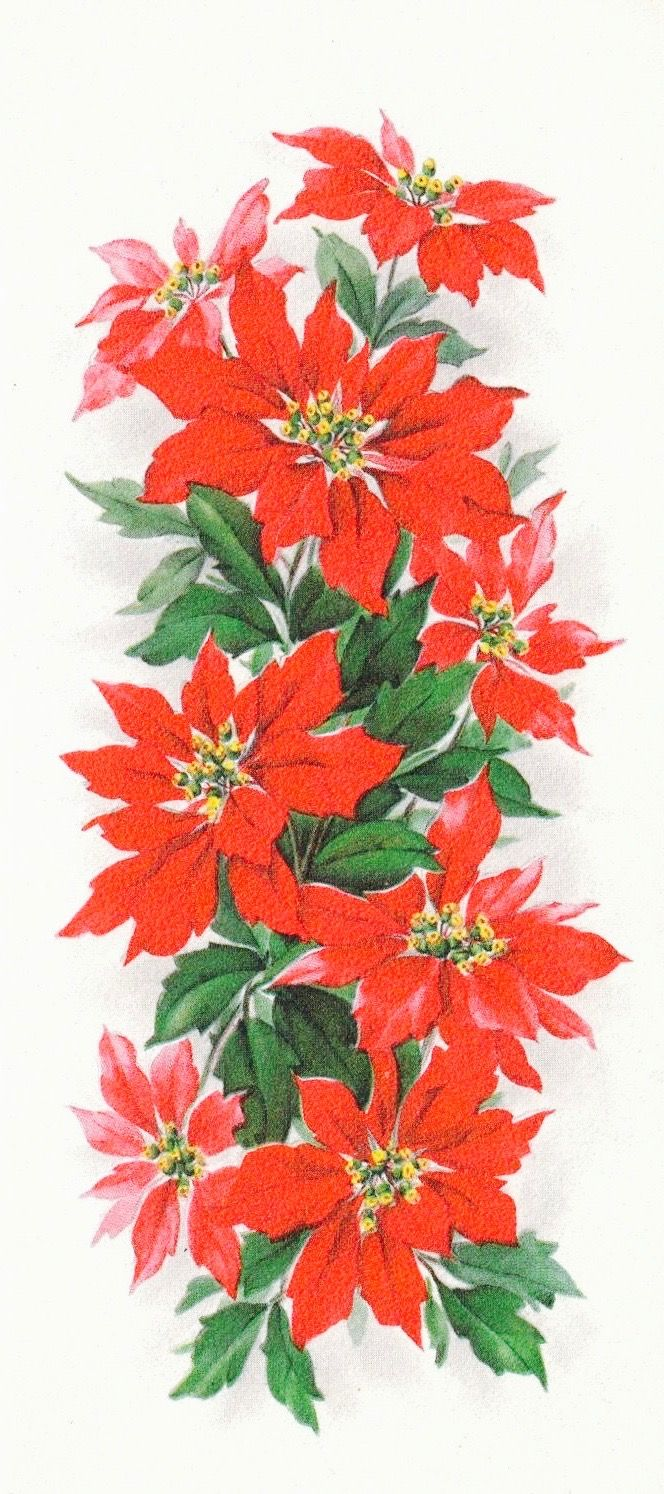 Christmas Poinsettias. Vintage Christmas Card. Retro Christmas Card.