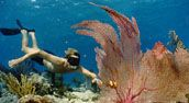 KEY WEST KEY - FLORIDA KEYS - ACCOMMODATIONS - RESORTS - HOTELS - MOTELS - JET SKI'S KAYAKS - DRY TORTUGAS - FISHING - DIVING