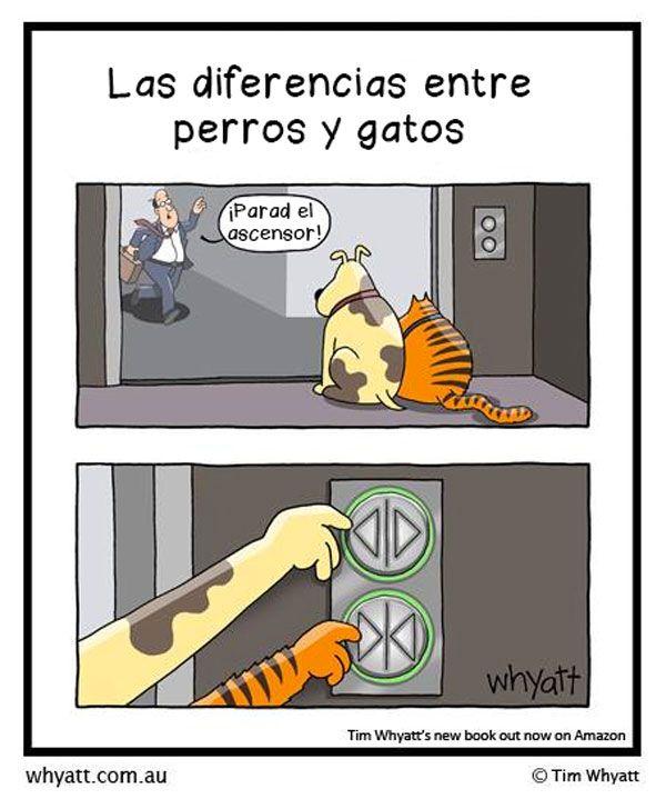 Diferencias entre gatos y perros.