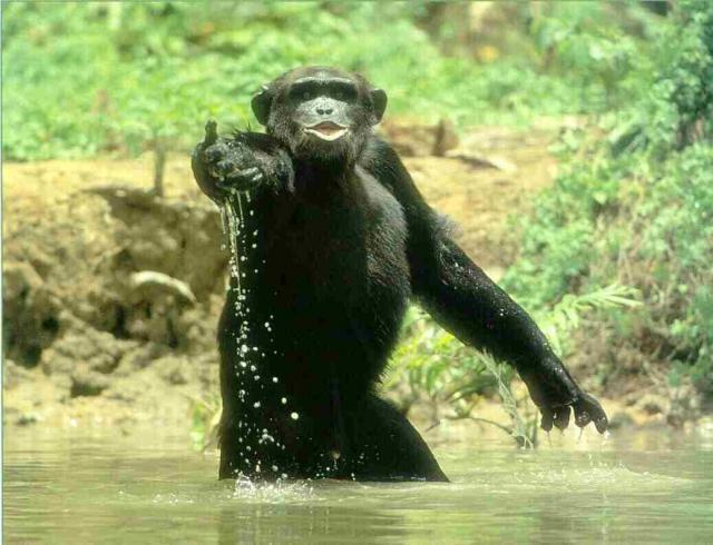 Bonobo market research - 3 part 9