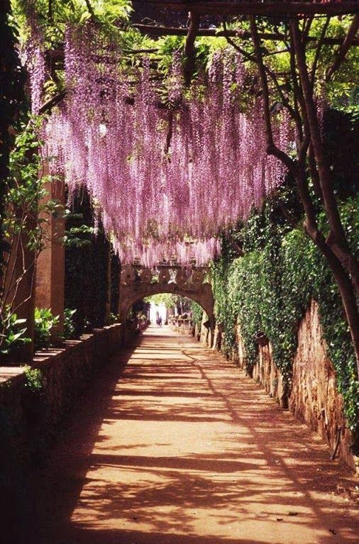 PINK WISTERIA (Glycine) overhanging an ancient walkway in Ravello, Italy, province of Salerno Campania Amalfi Coast