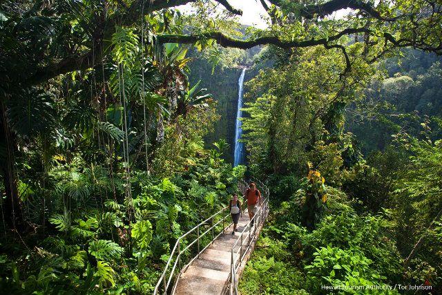初心者におすすめのハワイ島トレイルベスト3
