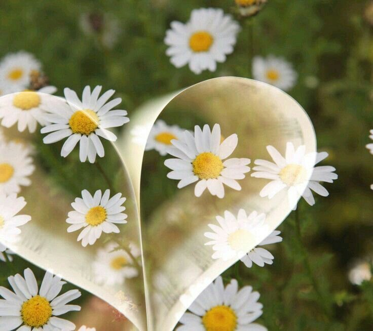Pin By Tracy Smith On Roses And Daisies Inspirational Quotes