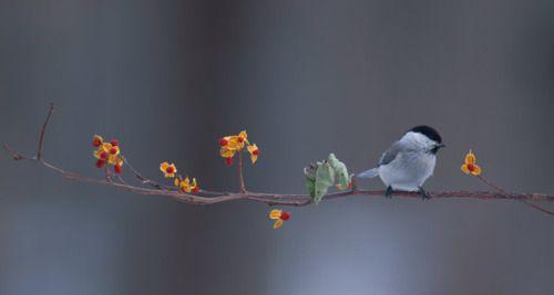 bird on blossoming tree