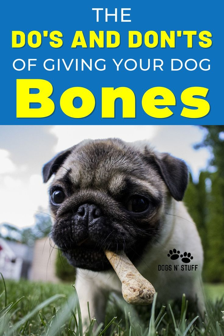 The Fantastic Benefits And Serious Hazards Of Feeding Your Dog