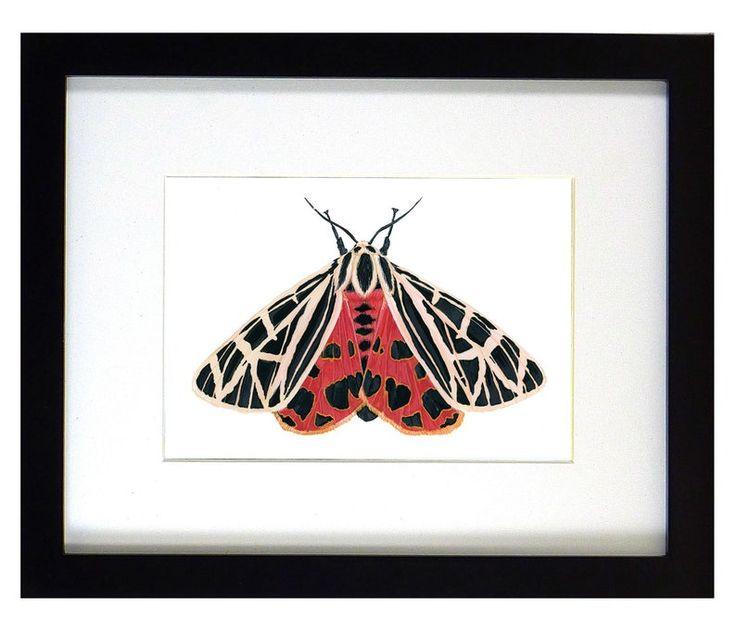 Artwork new tiger moth mounted tiger moth framed moth