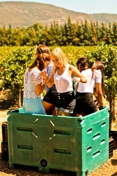 Volunteers in South Africa and having some fun in the Cape Winelands stomping grapes.