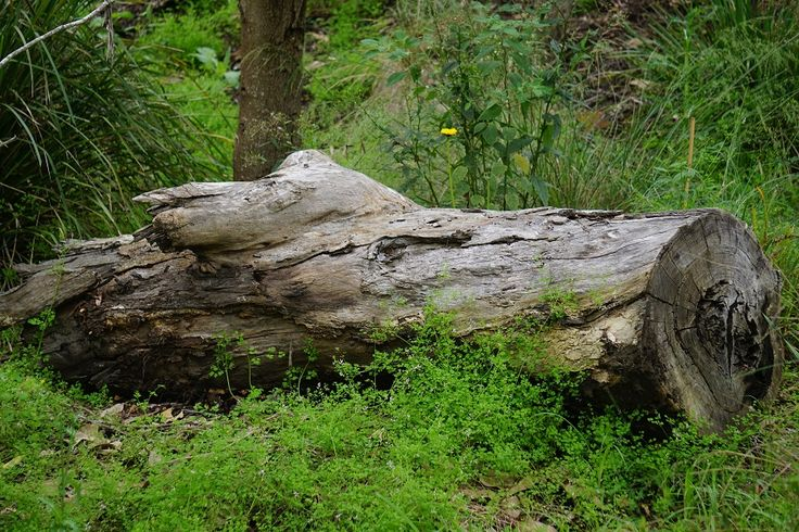 Tree trunk, nature, in the woods in Berrima
