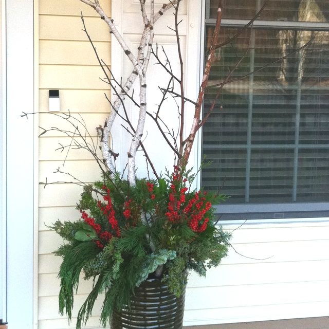 Outdoor planter for winter: Birch branches, red twig dogwood, evergreens, & red berries.