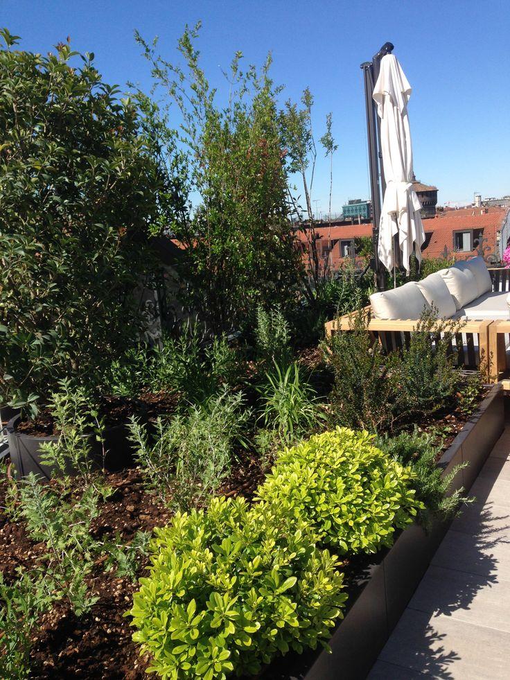 Verde pensile di 40 Mq a Prato con alberi e essenze.