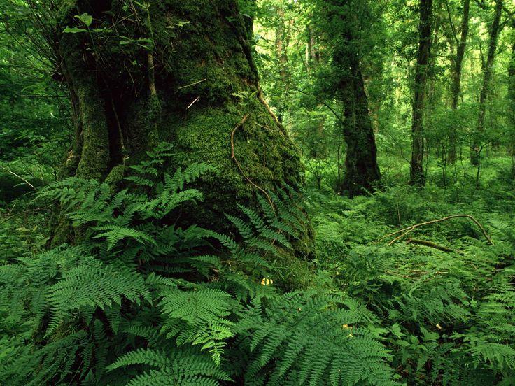 fotografias de bosques   Fotos de bosques