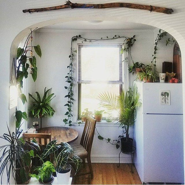 Whitewashed walls, rustic boho, and plants! Perfect!
