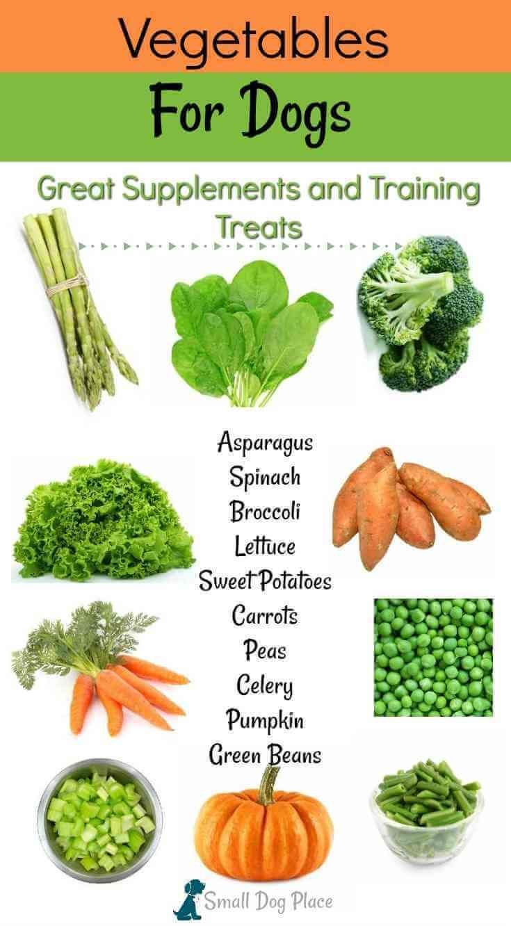 Vegetables For Dogs 20 Nutritious Treats For Your Dog Dog Food