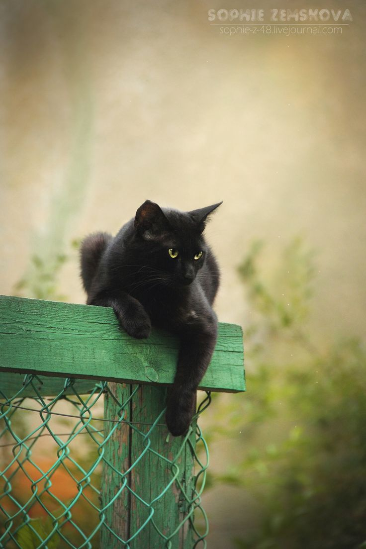 black cats are good luck ~ beautiful photo