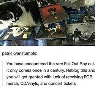 *repins forever* << I reblogged this on tumblr last week and on Tuesday I got my first ever fall out boy t shirt, the fall out boy cat works!!!<<<whoa