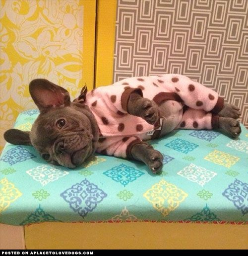 Penny, a French Bulldog puppy, all ready for bed in her cute little jammies. Limited Edition French Bulldog Tee http://teespring.com/lovefrenchbulldogs