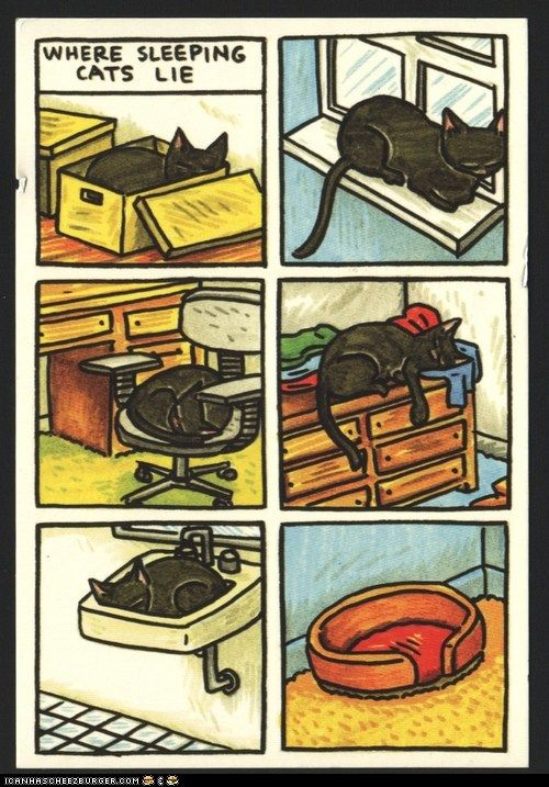 So true. My cats usually ignore all their kitty beds.