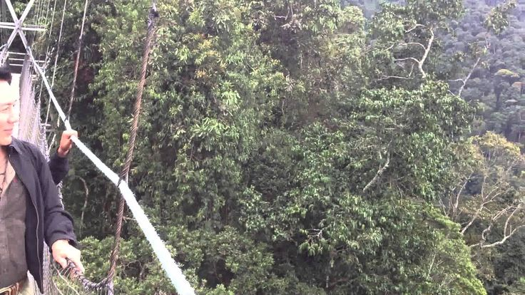 Crossing the Canopy Bridge in Nyungwe National Park-Rwanda