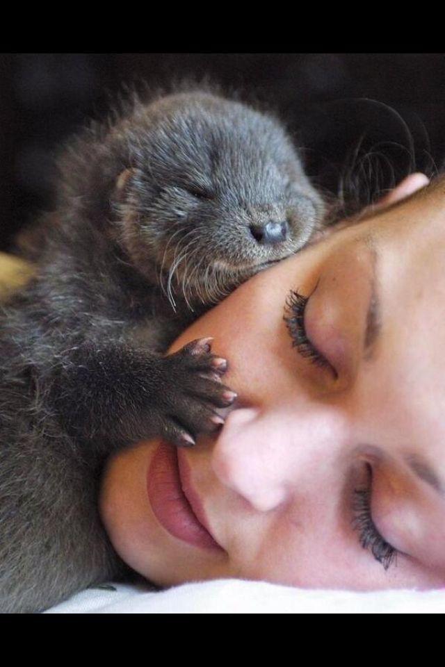 Otter kisses