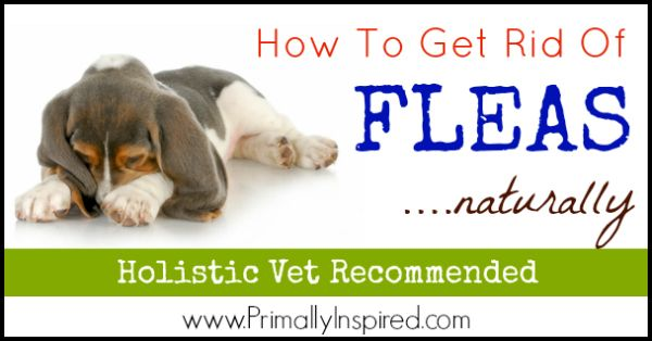 Natural Flea Control: How To Get Rid of Fleas Naturally - Primally Inspired
