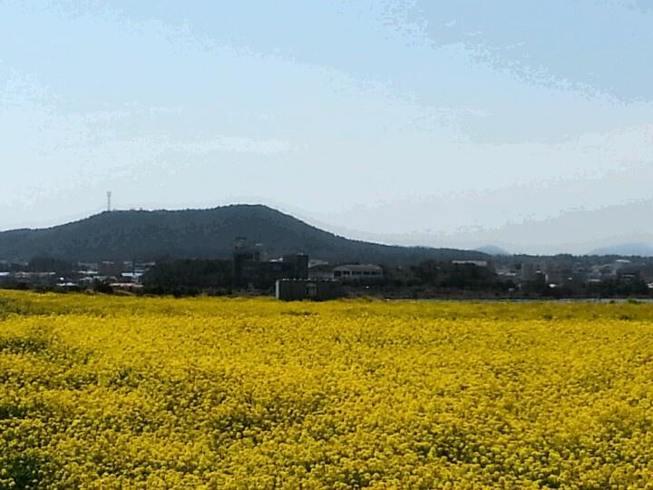 Yellowland