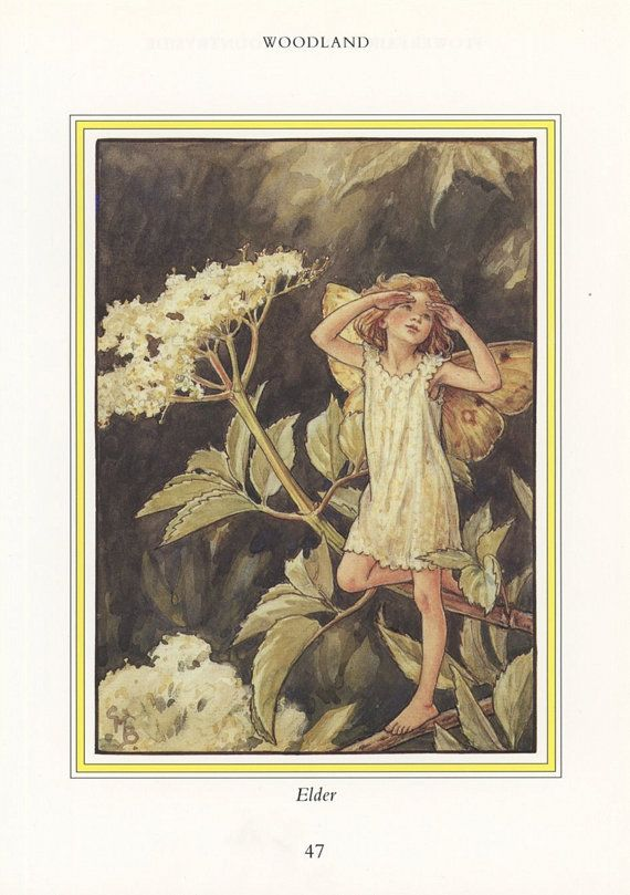 Elder Woodland Fairy, Flower Fairies Of The Countryside, Cicely Mary Barker, Antique Print, USA, 1989