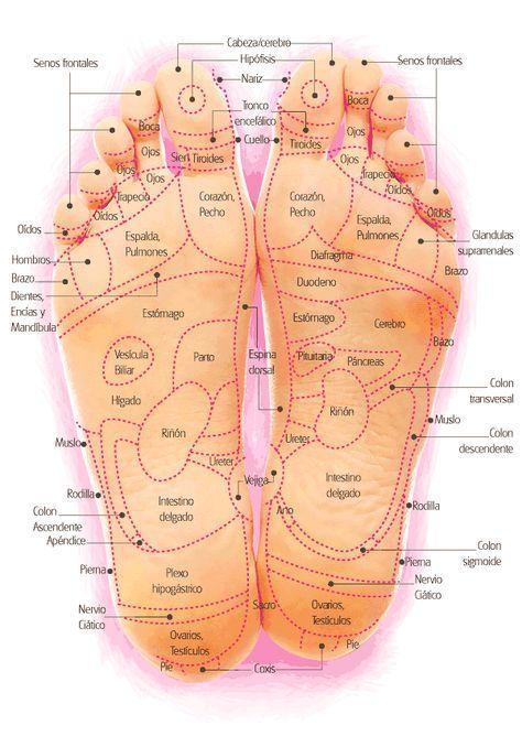 Con la reflexología podal se puede enviar mensajes a lo largo del sistema nervioso a todas las zonas del cuerpo y el cerebro ya que las zonas reflejas de los pies son de 5 a 20 veces más sensibles que los propios órganos.
