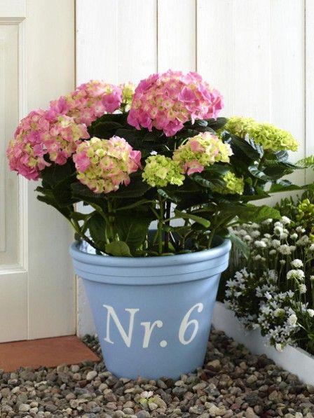 Mit dieser Deko-Idee gehen Ihr auf Nummer sicher: Die wunderschöne Hortensie ist ein echter Blickfang - mit Topf und Ihrer Hausnummer perfekt für den Eingang.