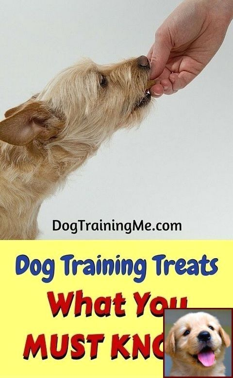 House Training A Puppy To Go Outside And Clicker Training Dogs