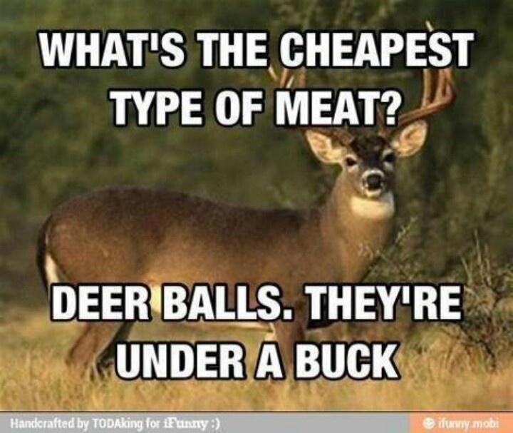 Deer balls | Funny | Pinterest