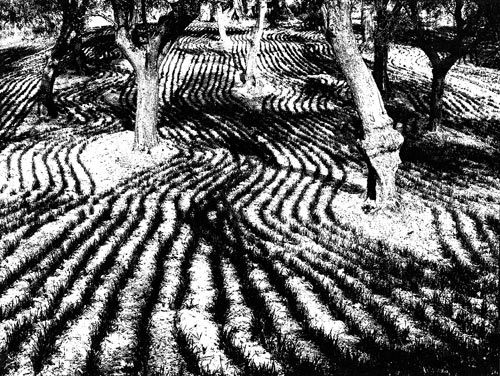 *Mario Giacomelli - I enjoy this photograph because of the contrast.  There are some grays, but when you first see it, it looks like just black and white.  It's almost like an optical illusion because of how your eyes have to adjust to be able to take in the whole photo.