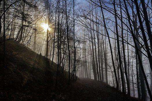 Magic Forest by Katarzyna Szymanska