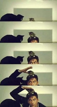 David Tennant & Cats! Can this man get any more perfect?