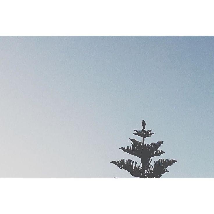 Tui tree topper. #tui #treetopper