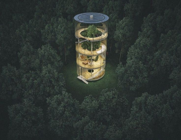Ein Glashaus um einen Baum gebaut – eine neue Art …