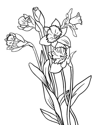 Printable daffodil coloring page Free PDF download at