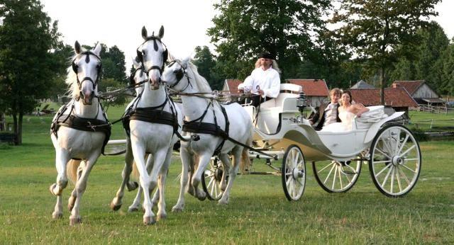 konie do ślubu - Szukaj w Google